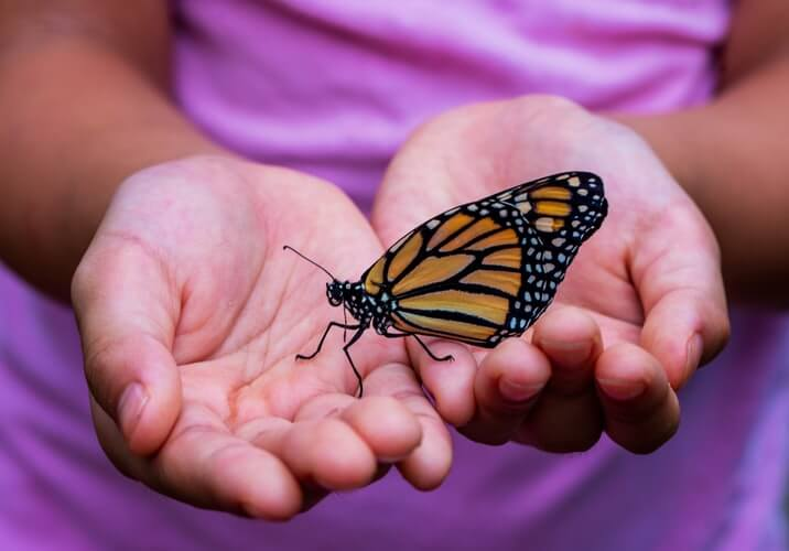 Child holding monarch butterfly at the Niagara Falls butterfly conservatory.