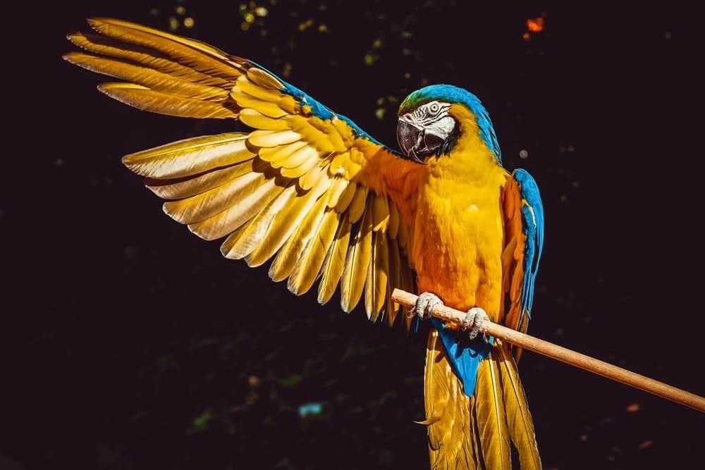 Parrot at Bird Kingdom Niagara Falls.